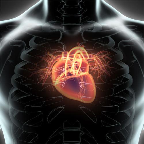 Herzklappenerkrankungen Neue Minimalinvasive Therapien